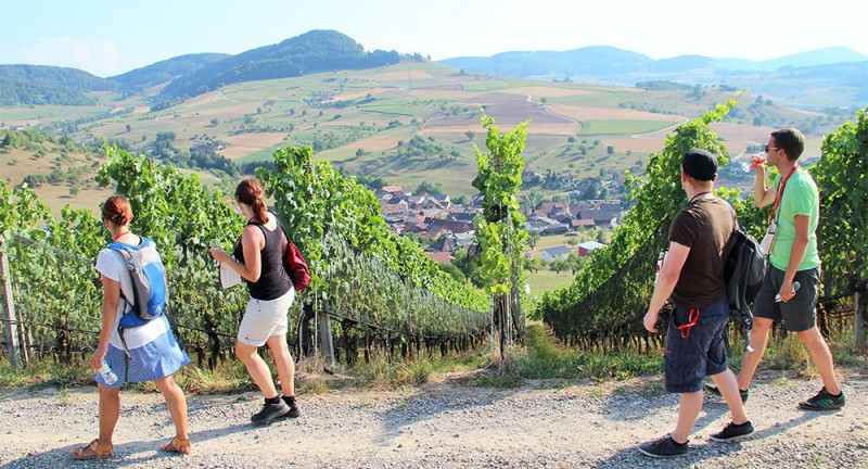 Jurapark Weinwanderung 2019